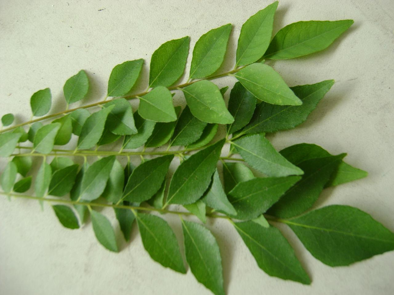 """<p>Curry leaves are packed with nutrition. They contain Vitamin A, Vitamin B, Vitamin C, Vitamin E, antioxidants and amino acids. They are also rich in carbohydrates, phosphorous, iron, magnesium, copper, fiber, minerals, amino acids and flavonoids. Research shows that alkaloids found in curry leaves possess antioxidant properties. Now doesn't something like this spike up the health quotient? """"Creative Commons Curry Leaf"""" by Sue Mah is licensed under CC BY 2.0 </p>"""