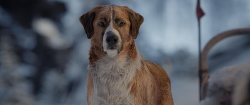 Chris Sanders' own dog wound up being the model for Buck. (Courtesy of Twentieth Century Fox and Disney)