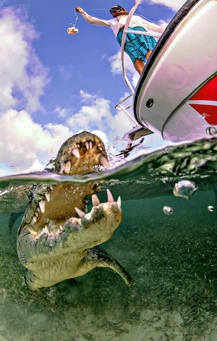 <p>Alex Suh has traveled to the Banco Chinchorro reef, in Mexico, twice in the past three years to get into the waters and capture the crocodiles in their natural habitat after an invitation from Yucatan Dive Trek. (Photo: Alex Suh/Caters News) </p>