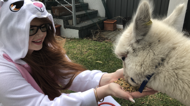 Rosie Renee wears a rabbit suit and sits to feed an alpaca from her hands.