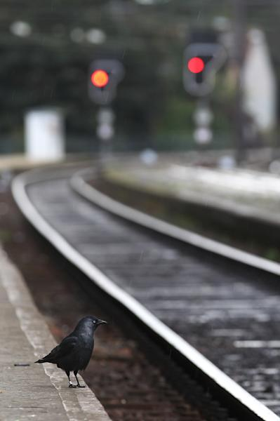 A jackdaw looks around on the platform of the deserted main train station in Ghent, western Belgium, Wednesday, Oct. 3, 2012. A 24-hour strike by Belgian rail workers on Wednesday paralyzed train traffic throughout Belgium and the international high-speed service to London and Paris. The strike, which started late Tuesday, reached its peak during the Wednesday morning rush hour when tens of thousands of commuters had to take to traffic-choked highways to get into the capital or work. (AP Photo/Yves Logghe)