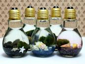 "<p>Don't worry, this gift doesn't include real animals. Made with a variety of materials, these lightbulb aquariums will look great on your desk, making them a perfect Secret Santa present. Find out how to make one <a href=""http://soapdelinews.com/2014/12/easy-marimo-moss-ball-diy-light-bulb-aquarium.html#_a5y_p=6582711"" rel=""nofollow noopener"" target=""_blank"" data-ylk=""slk:here"" class=""link rapid-noclick-resp"">here</a>.<br><em>[photo: soapdelinews]</em> </p>"