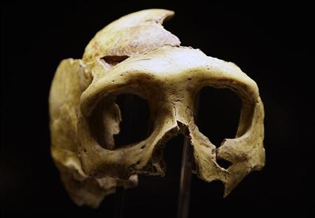 To match Reuters Life! NEANDERTHAL-CROATIA/MUSEUM