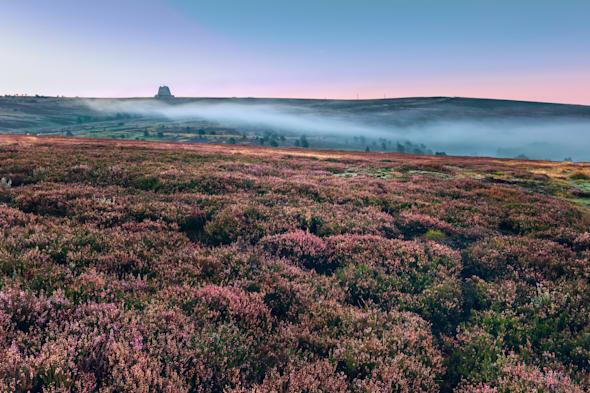 Dawn breaks over the North York Moors national park revealing heather in bloom and mist. RAF Fylingdales in background.