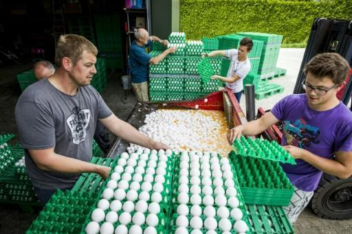 Millions of Dutch eggs destroyed in growing insecticide scandal
