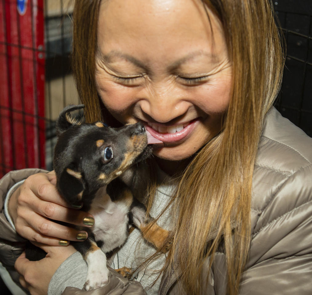 IMAGE DISTRIBUTED FOR MACY'S - Macy's celebrates 16 years partnering with the SF SPCA, finding forever homes for over 9,000 animals, Friday, Nov. 17, 2017 in San Francisco. Mike, the puppy, makes an impression on Kuanmei Huang behind the viewing windows. (Tomas Ovalle/AP Images for Macy's)