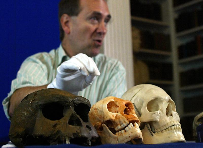 LONDON, UNITED KINGDOM: Professor Chris Stringer of the Natural History Museum holds his hand over a skull (C) that was found at a cave site called Liang Bua that belonged to an individual who, while fully adult, was barley a metre tall and had a skull the size of a grapefruit, 27 October 2004 in London during the announcment of the discovery of a new species of human living on the Indonesian island of Flores as recently as 18,000 years ago demonstrates that human diversity in recent past was much greater than expected. The skull homoserectus from Java (L) and a human skull (R) surround the newly found skull, all courtesy of the Science Museum. PICTURE EMBARGOED UNTIL 1800 GMT AFP PHOTO/JIM WATSON (Photo credit should read JIM WATSON/AFP/Getty Images)