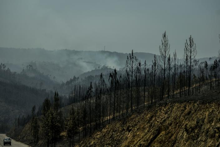 A car drives past a burnt forest after a wildfire in Vila de Rei, central Portugal on July 21, 2019. (Photo: Patricia De Melo Moreira/AFP/Getty Images)