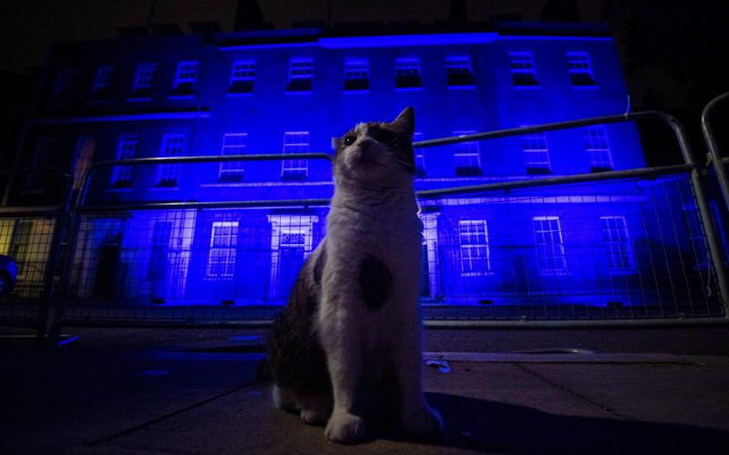 Larry the cat stands in front of 10 Downing Street in London as it is illuminated blue on Saturday evening as part of the NHS celebrations - Victoria Jones/PA Wire