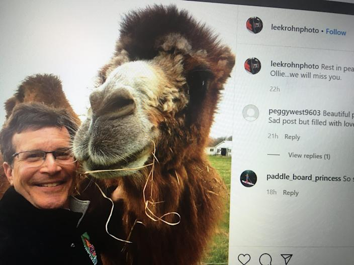 Lee Krohn, town manager of Shelburne, posted a photo posing with Ollie the camel, a Ferrisburgh, Vt., icon.