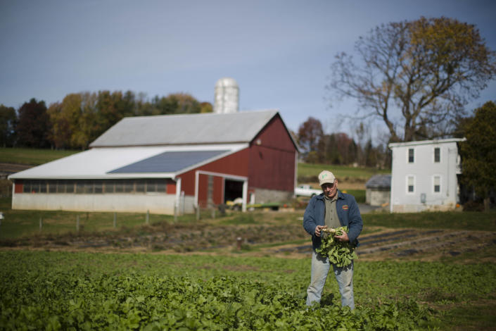 """Dennis Hess displays a radish at his farm Monday, Nov. 4, 2013, in Litiz, Pa. You can take our word for it: Americans don't trust each other anymore. An AP-GfK poll conducted last month found that Americans are suspicious of each other in everyday encounters. Less than a third expressed a lot of trust in clerks who swipe their credit cards, drivers on the road, or people they meet when traveling. However, there are still trusters around to set an example like Dennis Hess who runs an unattended farm stand on the honor system. Customers pick out their produce, tally their bills and drop the money into a slot, making change from an unlocked cashbox. """"When people from New York or New Jersey come up,"""" said Hess, """"they are amazed that this kind of thing is done anymore."""" (AP Photo/Matt Rourke)"""