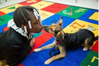 <p>A comfort dog named Juno gives a kiss to a student at a Queens public school. </p>