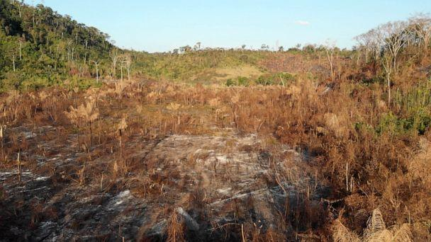 PHOTO: The Guajajara say the pace of deforestation in the Amazon has accelerated in recent years. (ABC News)