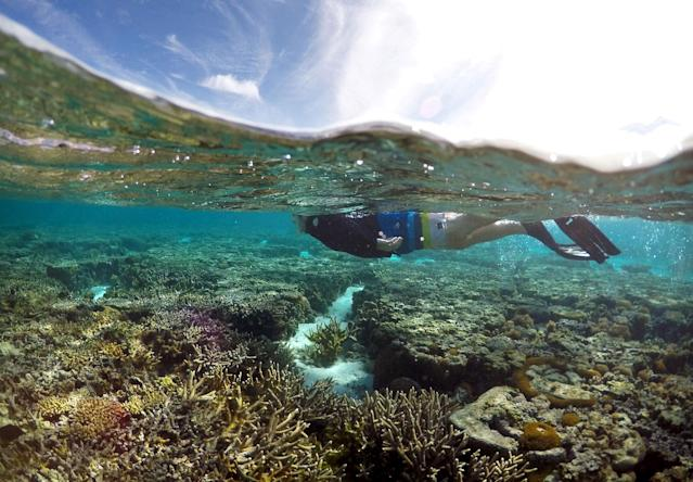 """<p>A tourist snorkels above coral in the lagoon located on Lady Elliot Island and 80 kilometers north-east from the town of Bundaberg in Queensland, Australia, June 9, 2015. UNESCO World Heritage delegates recently snorkeled on Australia's Great Barrier Reef, thousands of coral reefs, which stretch over 2,000 km off the northeast coast. Surrounded by manta rays, dolphins and reef sharks, their mission was to check the health of the world's largest living ecosystem, which brings in billions of dollars a year in tourism. Some coral has been badly damaged and animal species, including dugong and large green turtles, are threatened. UNESCO said the reef's outlook was """"poor"""". (David Gray/Reuters) </p>"""