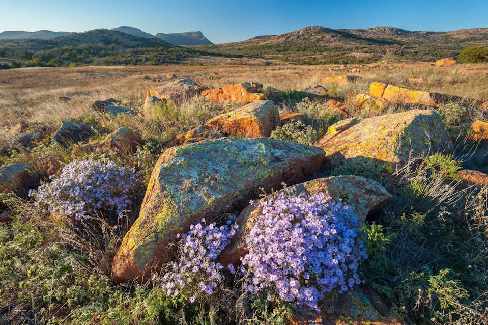 """<p><strong>Where to go:</strong> The Wichita Mountain Wildlife Refuge includes forested areas with post oak, blackjack oak, and eastern red cedar, but venture into the grasslands to see fall wildflowers like these purple asters. </p><p><strong>When to go:</strong> Mid-November</p><p><a class=""""link rapid-noclick-resp"""" href=""""https://go.redirectingat.com?id=74968X1596630&url=https%3A%2F%2Fwww.tripadvisor.com%2FHotels-g28957-Oklahoma-Hotels.html&sref=https%3A%2F%2Fwww.redbookmag.com%2Flife%2Fg34045856%2Ffall-colors%2F"""" rel=""""nofollow noopener"""" target=""""_blank"""" data-ylk=""""slk:FIND A HOTEL"""">FIND A HOTEL</a></p><p><strong>RELATED: <a href=""""https://www.goodhousekeeping.com/life/travel/news/g4278/best-vacation-spots/?slide=1"""" rel=""""nofollow noopener"""" target=""""_blank"""" data-ylk=""""slk:30+ Amazing Vacation Spots for When You Really Need to Escape"""" class=""""link rapid-noclick-resp"""">30+ Amazing Vacation Spots for When You Really Need to Escape</a></strong></p>"""