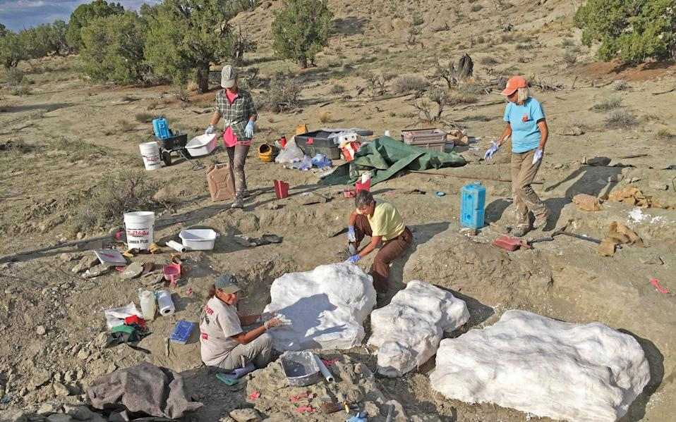 Researchers prepare fossils to be airlifted from the Rainbows and Unicorns Quarry on Grand Staircase-Escalante National Monument  - Bureau of Land Management