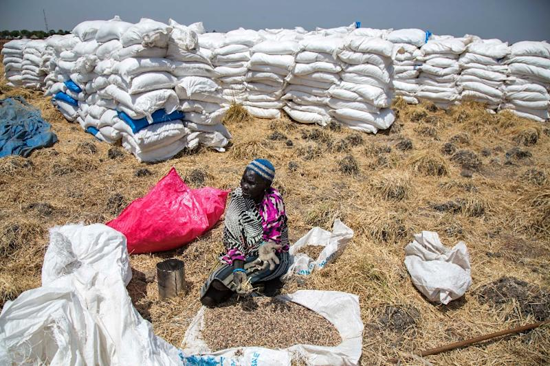 A woman collects grains left on the ground after food distribution in Ganyiel (AFP Photo/Albert Gonzalez Farran)