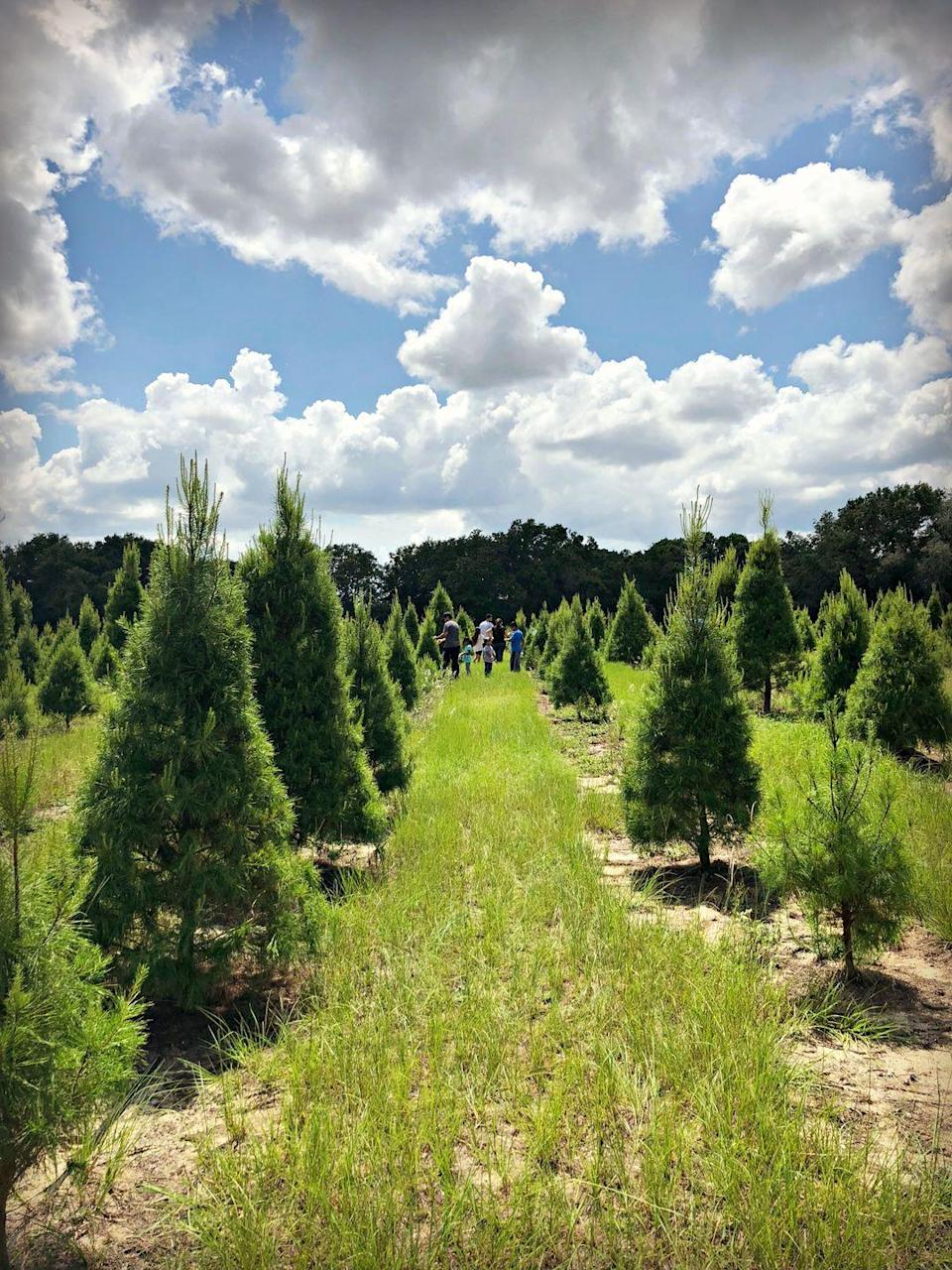 """<p><strong>Eustis, Florida</strong> (Starting November 23)</p><p>St. Nick's Winter Wonderland is a kid's (or kid-at-heart's) dream. Complete with horse rides, a zip line, and rubber duck race (among other activities), you'll never be bored in <strong><a href=""""http://www.santaschristmastreeforest.com/hours-and-info"""" rel=""""nofollow noopener"""" target=""""_blank"""" data-ylk=""""slk:Santa's Christmas Tree Forest"""" class=""""link rapid-noclick-resp"""">Santa's Christmas Tree Forest</a></strong>. Before you get too worn out, don't forget to cut your very own live tree. </p>"""