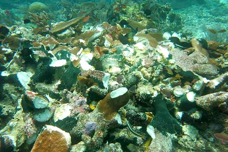 The accident has damaged an estimated 13,500 square metres (145,000 square feet) of coral reef