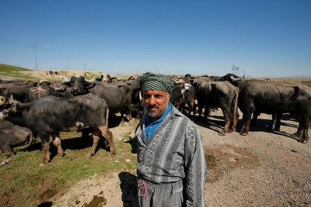A displaced Iraqi farmer from Badush, northwest of Mosul, who fled his village and later returned to retrieve their buffaloes looks on as the battle against Islamic State's fighters continues in Mosul