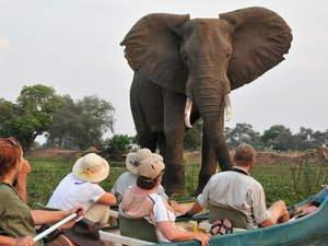 Seasoned Professional Guides Offer Invaluable Insights, Enhance Educational Experiences, Foster Lasting Memories of Adventures on African Safaris