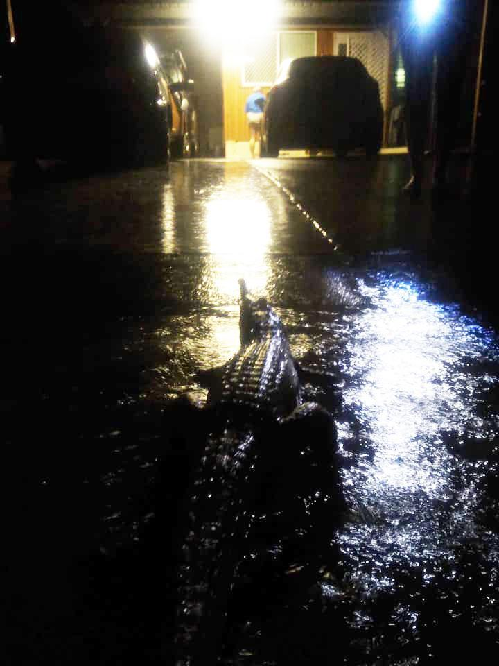 One crocodile was spotted in a flooded Mundingburra driveway on Sunday night. Source: Facebook/Erin Hahn