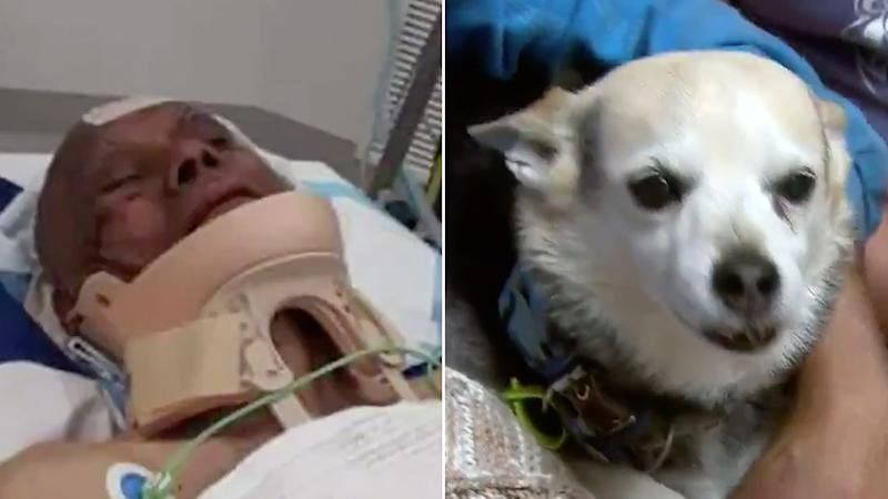 Sydney Ellis (pictured left with injuries to his face and a brace around his neck in a hospital bed) was attacked when he tried to rescue his dog (right), who was stolen by a stranger in Melbourne.