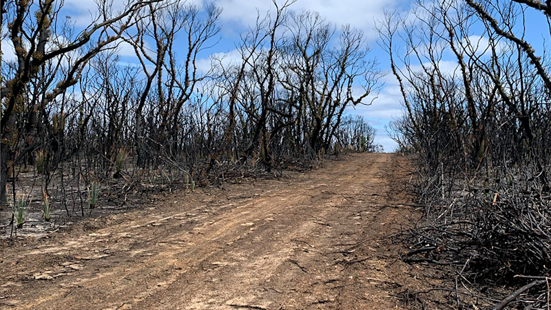 A track leading through a burnt out forest on Kangaroo Island