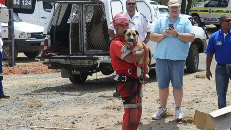 'Underdog' Rescued From Plunge into Open Pit Diamond Mine