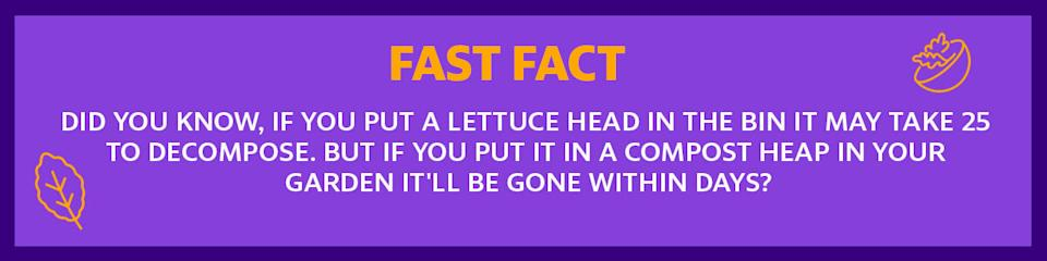 Image shows a Fast Fact about lettuce heads and composting.
