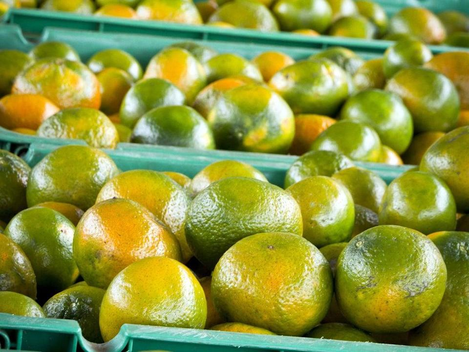The cure for scurvy  (Getty)