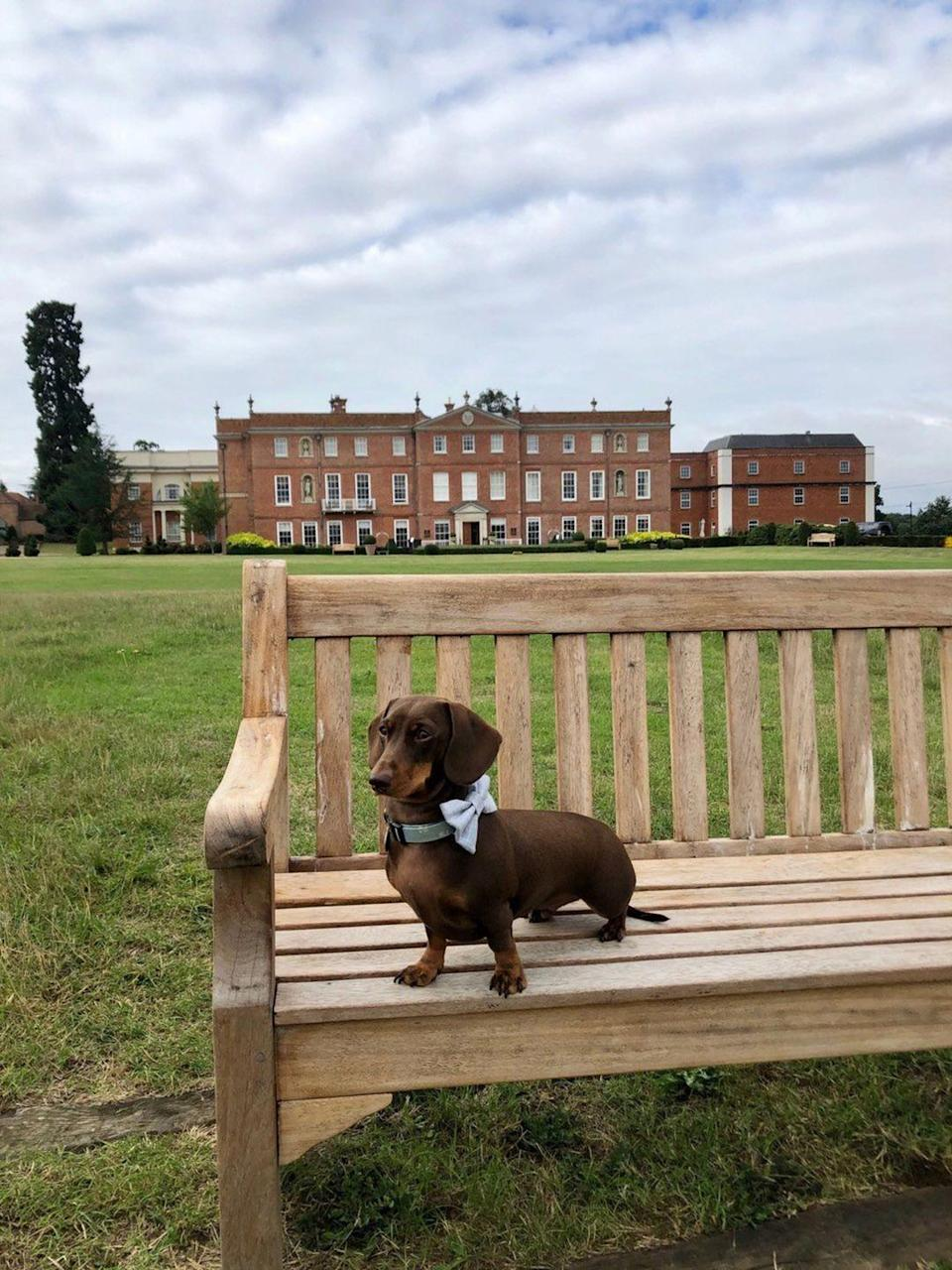 """<p>At Hampshire's Four Seasons outpost, dogs have no fewer than 500 acres of countryside to roam across – the grand grounds include a lake, lawn, shooting field and a spa set in the stables. Competing in the cuteness ranks are Milo and Dougal, two Shetland-pony inhabitants of the on-site equestrian centre. Furry companions will be given a bed and spring water, and the doorman has bags ready for walkies. Pets are welcome in the Wild Carrot bar – but they'll have to wait in your room while you tackle the main restaurant's farmers'-market banquet on Sunday afternoons.</p><p>For more information, visit <a href=""""https://www.fourseasons.com/hampshire/"""" rel=""""nofollow noopener"""" target=""""_blank"""" data-ylk=""""slk:fourseasons.com"""" class=""""link rapid-noclick-resp"""">fourseasons.com</a>.</p>"""
