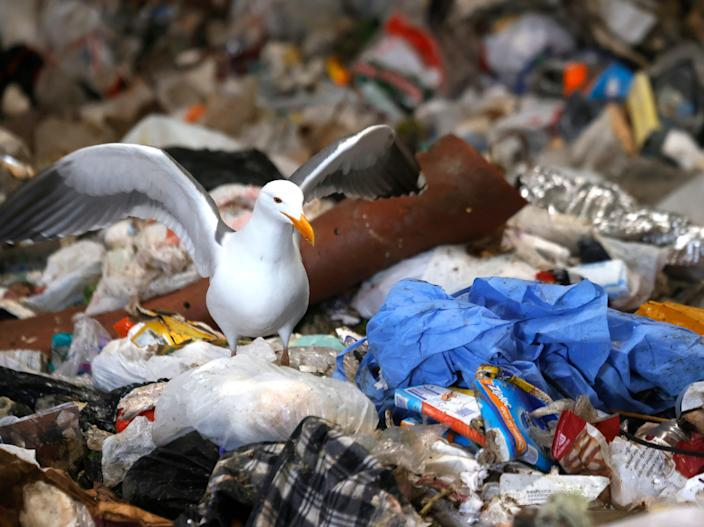 A seagull stands next to a mound of plastic in San Francisco, California (Justin Sullivan/Getty)