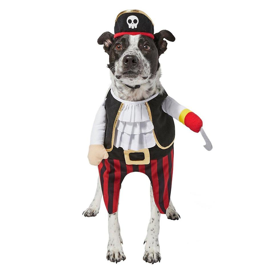 Dog wearing a Frisco Front Walking Pirate Dog & Cat Costume on a white background
