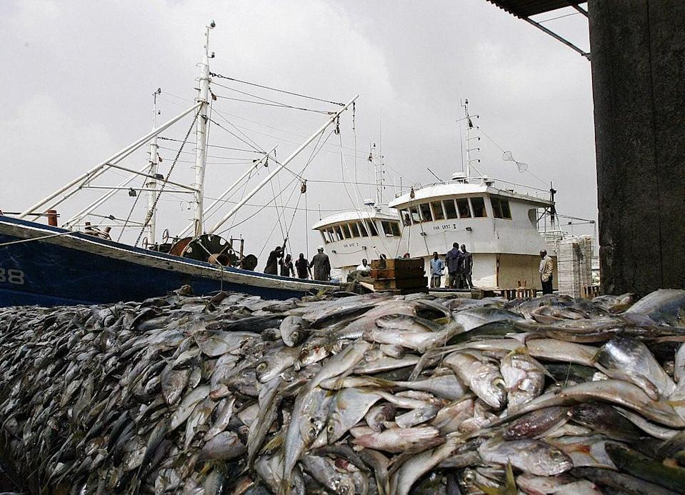 <p>'An estimated area of 1.9 million square miles is bottom trawled each year – that's 230 times the size of Wales'</p> (AFP via Getty Images)