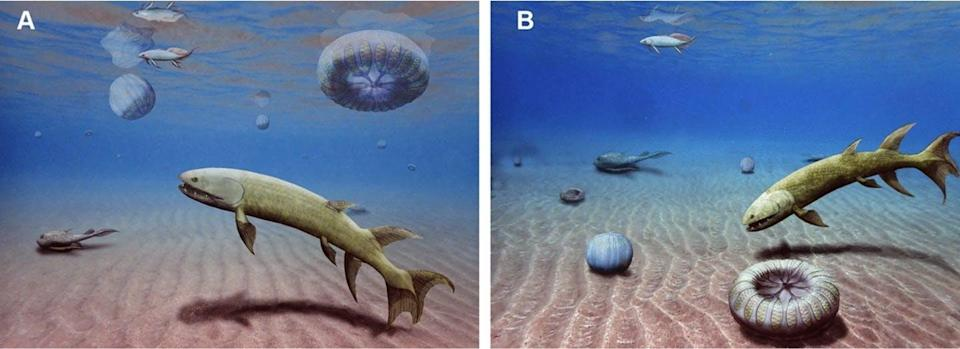 Illustration showing two possible reconstructions of acomb jelly fossil