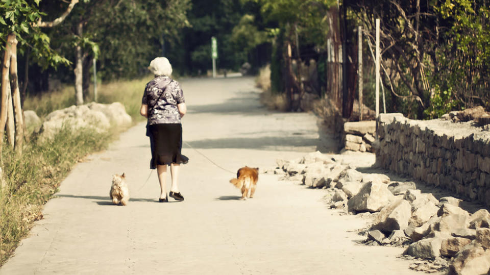 <p>Want to combine fitness and your love of animals with a part-time income? This job would let you walk your paws off. Average pay comes in at $13.06 per hour. (Getty) </p>