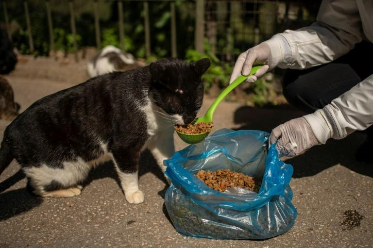 The global lockdowns against the coronavirus are tantamount to a death sentence of stray cats and dogs
