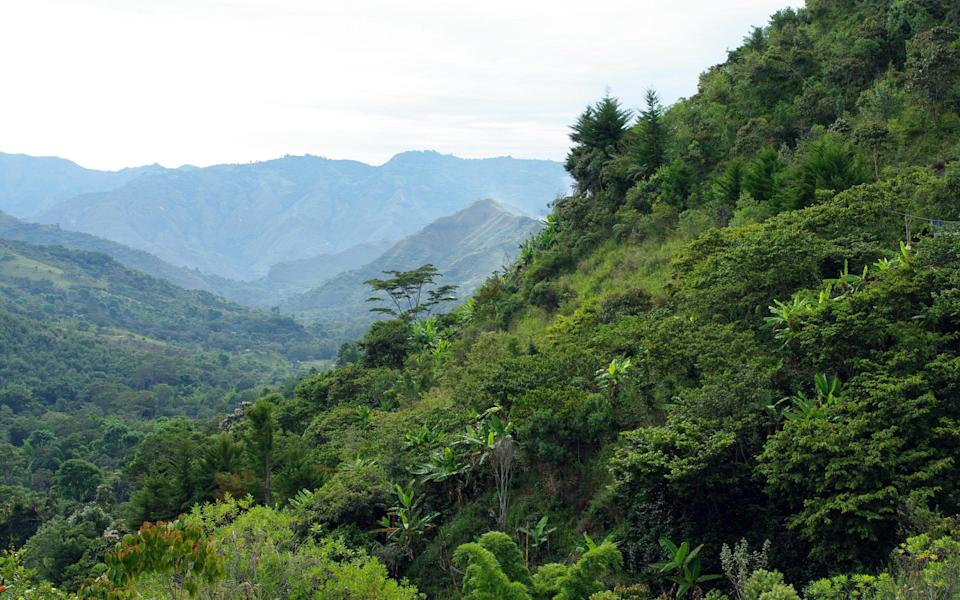 We are losing the secrets of the rainforest faster than we can understand them - Getty