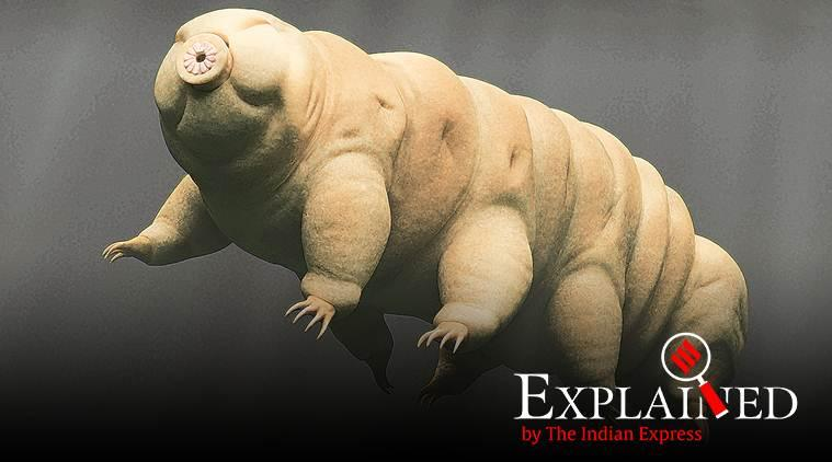 What is Tardigrade water bear, Tardigrade on moon, Israeli spacecraft Beresheet crash, express explained