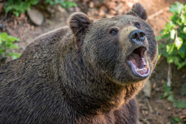 Singapore is Still Stuck in a Bear Market: 3 Things You Need to Know