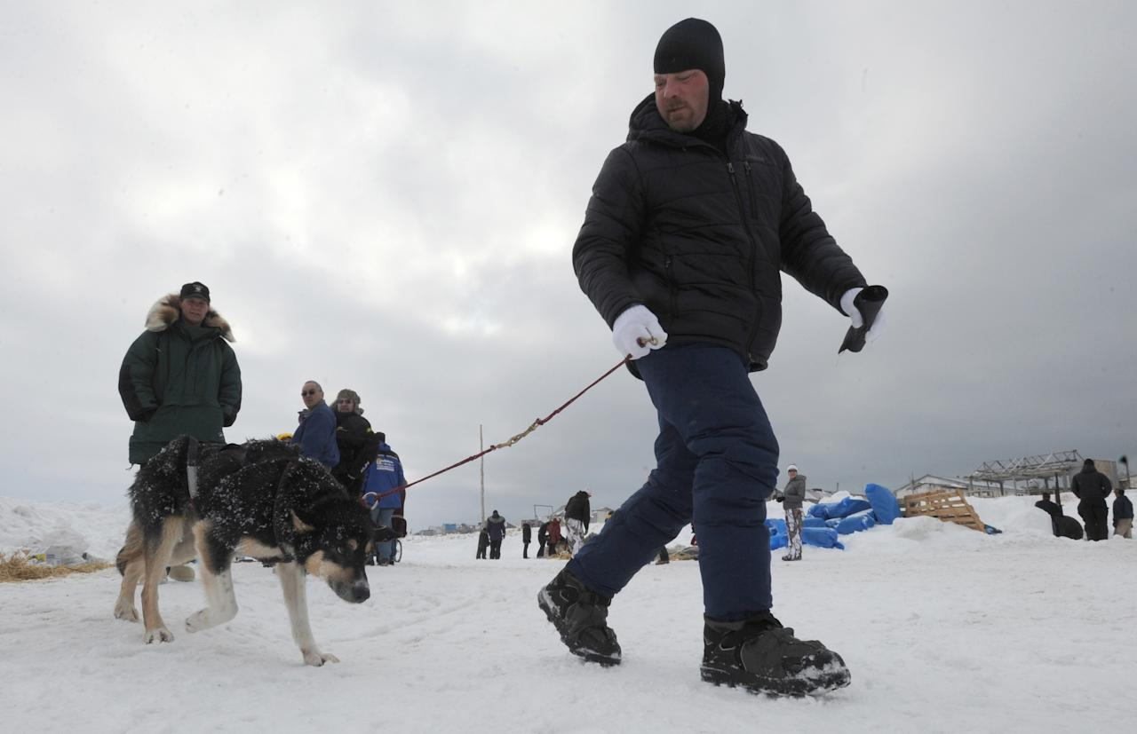 Musher Aaron Burmeister walks one of his sled dogs prior to leaving Unalakleet on Sunday, March 10, 2013, during the Iditarod Trail Sled Dog Race. (AP Photo/Anchorage Daily News, Bill Roth)