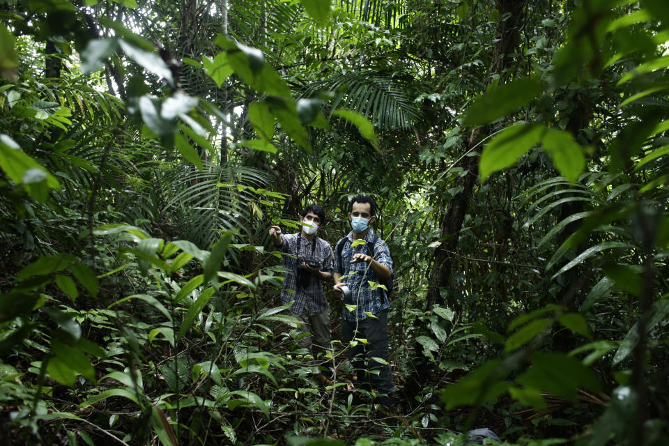 Biologists Claudio Monteza, right, and Pedro Castillo, look for a place to install a camera in a dense tropical rainforest in San Lorenzo, Panama, Tuesday, April 6, 2021, amid the new coronavirus pandemic. A year ago, Monteza had just finished a master's degree in the United States and was stopping by his native Panama for a few days before flying to Germany to begin his doctoral studies when the COVID-19 pandemic stranded him. (AP Photo/Arnulfo Franco)