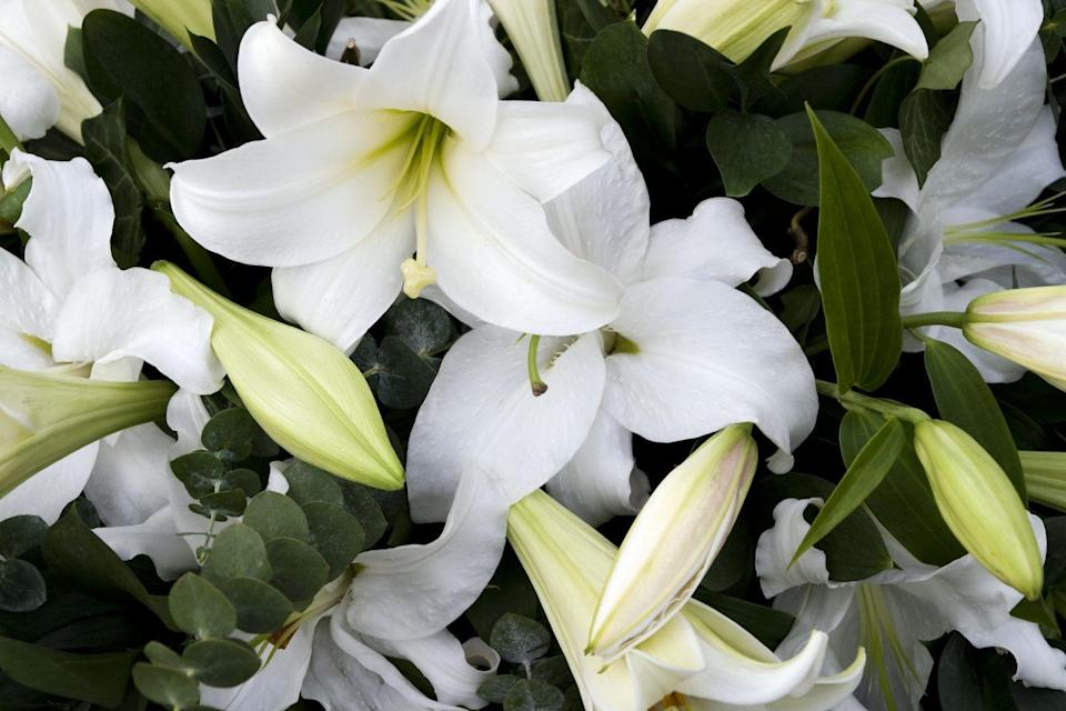 """<p>Signifying hope, white lily flowers are at the top of the list for 2021. Simple and stunning, they are perfect for sprucing up a dull corner of your home. </p><p><a class=""""link rapid-noclick-resp"""" href=""""https://go.redirectingat.com?id=127X1599956&url=https%3A%2F%2Fwww.thompson-morgan.com%2Fp%2Fnerine-bowdenii-alba%2FT59680TM&sref=https%3A%2F%2Fwww.countryliving.com%2Fuk%2Fhomes-interiors%2Fgardens%2Fg35147195%2Fflower-trends-2021%2F"""" rel=""""nofollow noopener"""" target=""""_blank"""" data-ylk=""""slk:BUY NOW VIA THOMPSON & MORGAN"""">BUY NOW VIA THOMPSON & MORGAN</a></p>"""