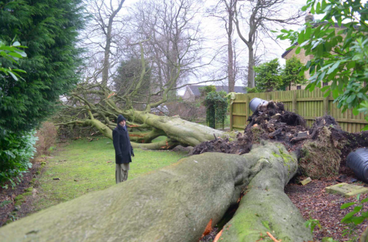 The trees fell onto a swing set and a public path (SWNS)