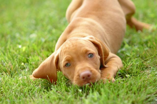 dog cancer discovery