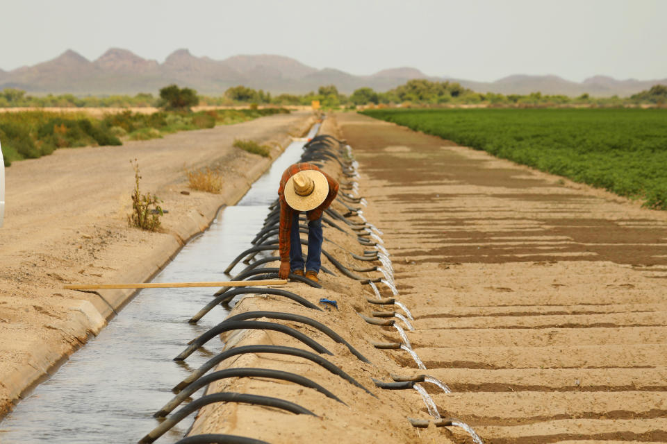 A worker moves irrigation tubes on a farm in Pinal County at Minal, Ariz.