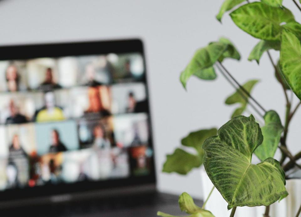 A laptop shows a video call in progress with a houes plant next to the screen.