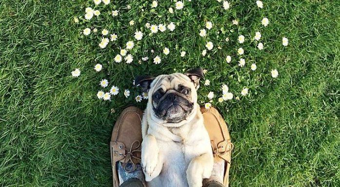 Norm the pug and his human go on beautiful adventures, and we're crying