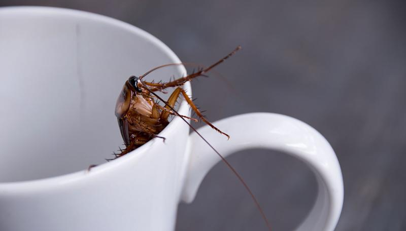 Why cockroach milk is being hailed as the next big superfood